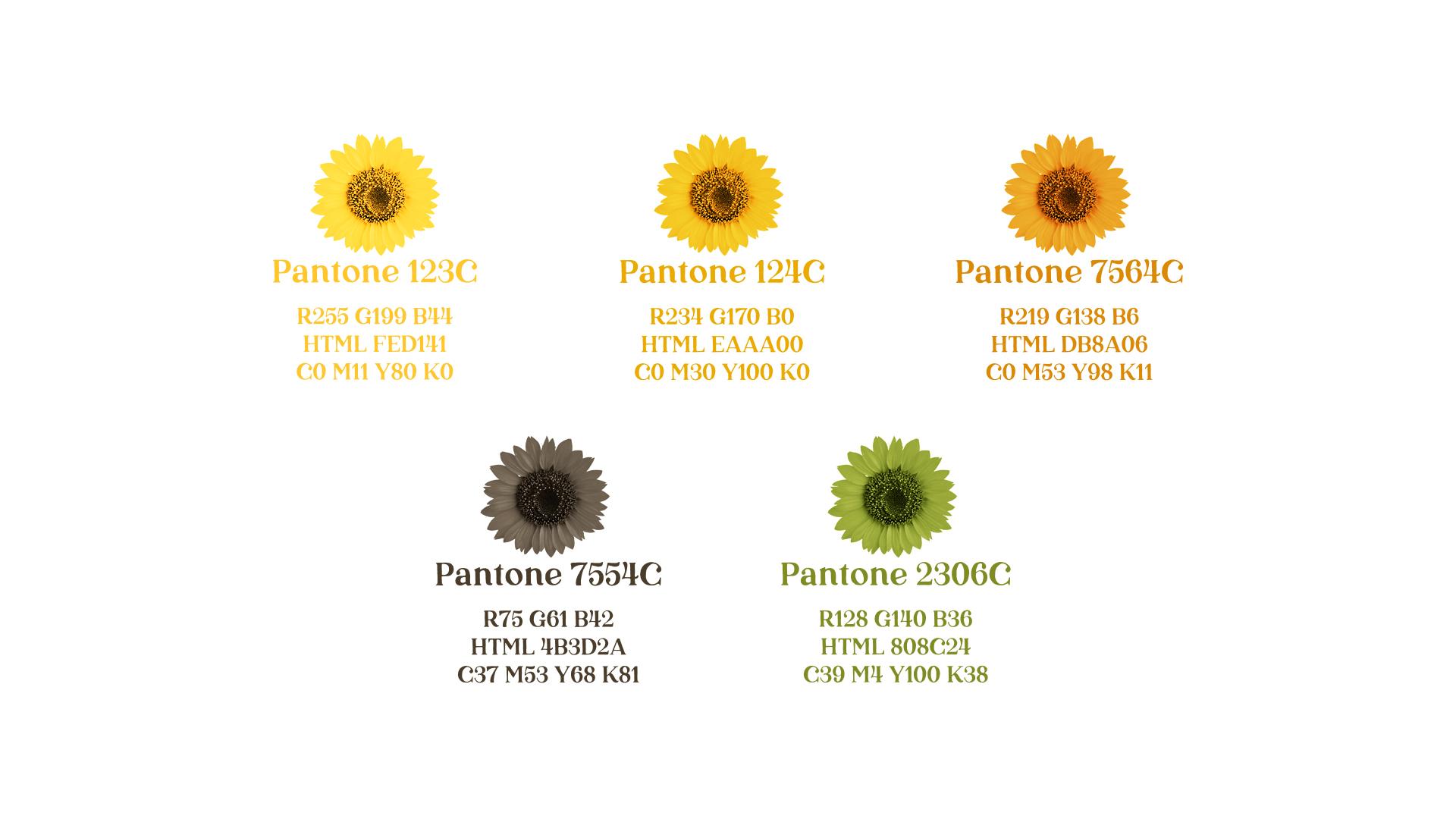Wellness Brand Design color palette